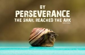 Perseverente